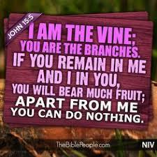 vinefruits
